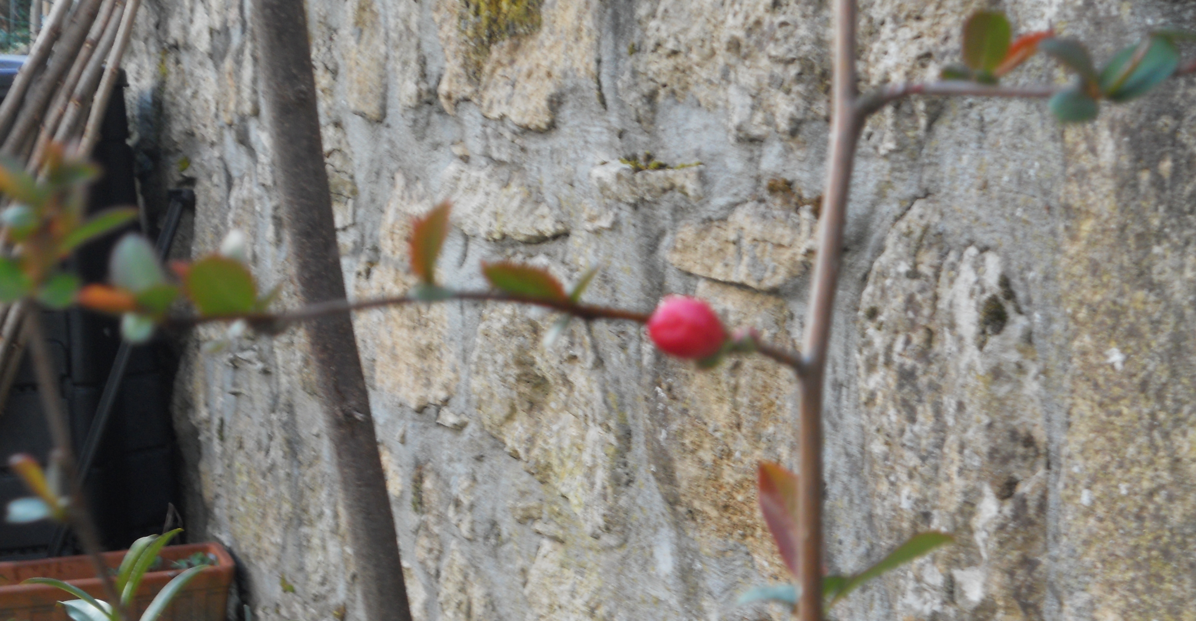 Au jardin le printemps frissonne papillons de mots - Pommier du japon toxique ...