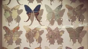 papillons épinglés