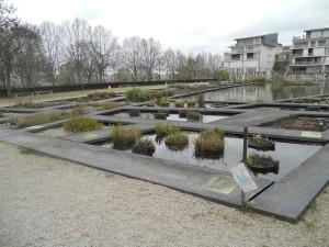 31 jardin aquatique