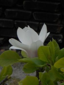 38 magnolia
