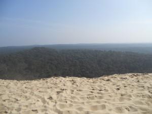 dune et pins