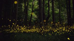 longue-exposition-des-paysages-japonais-illumines-par-le-voyage-des-lucioles151