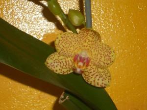 orchidée 6
