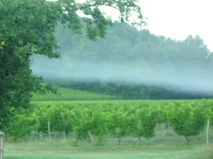brume matin 2