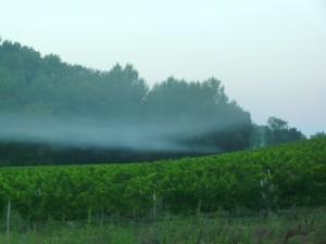 brume matin