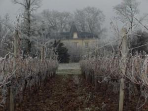 Vigne, gel et Chateau