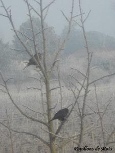 branche a oiseaux