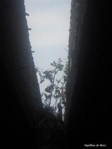 toit jardin 21