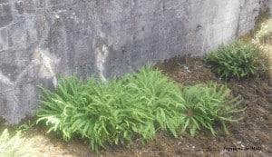 toit jardin 8