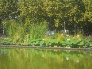 15 Lotus