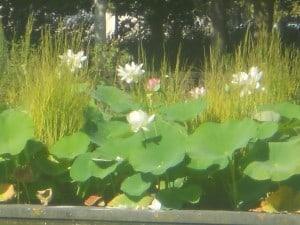 16 Lotus