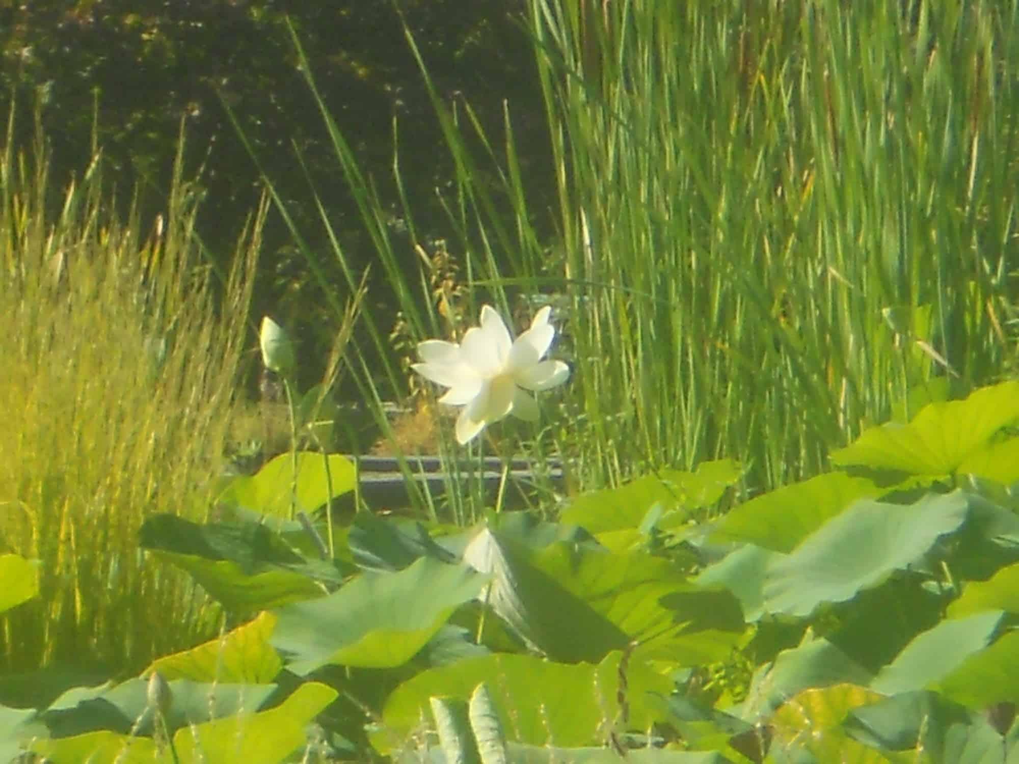 Nymph as papillons de mots for Papillon jardin botanique 2015
