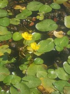 21 plante flottante