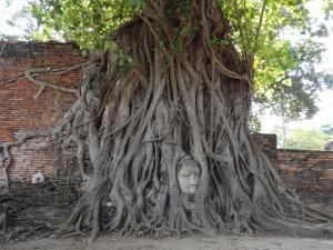 le bouddha dans l'arbre