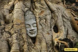 tete-de-bouddha-arbre