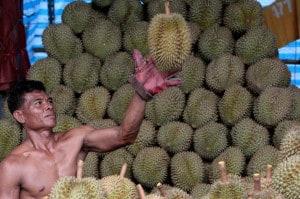 durian_hero
